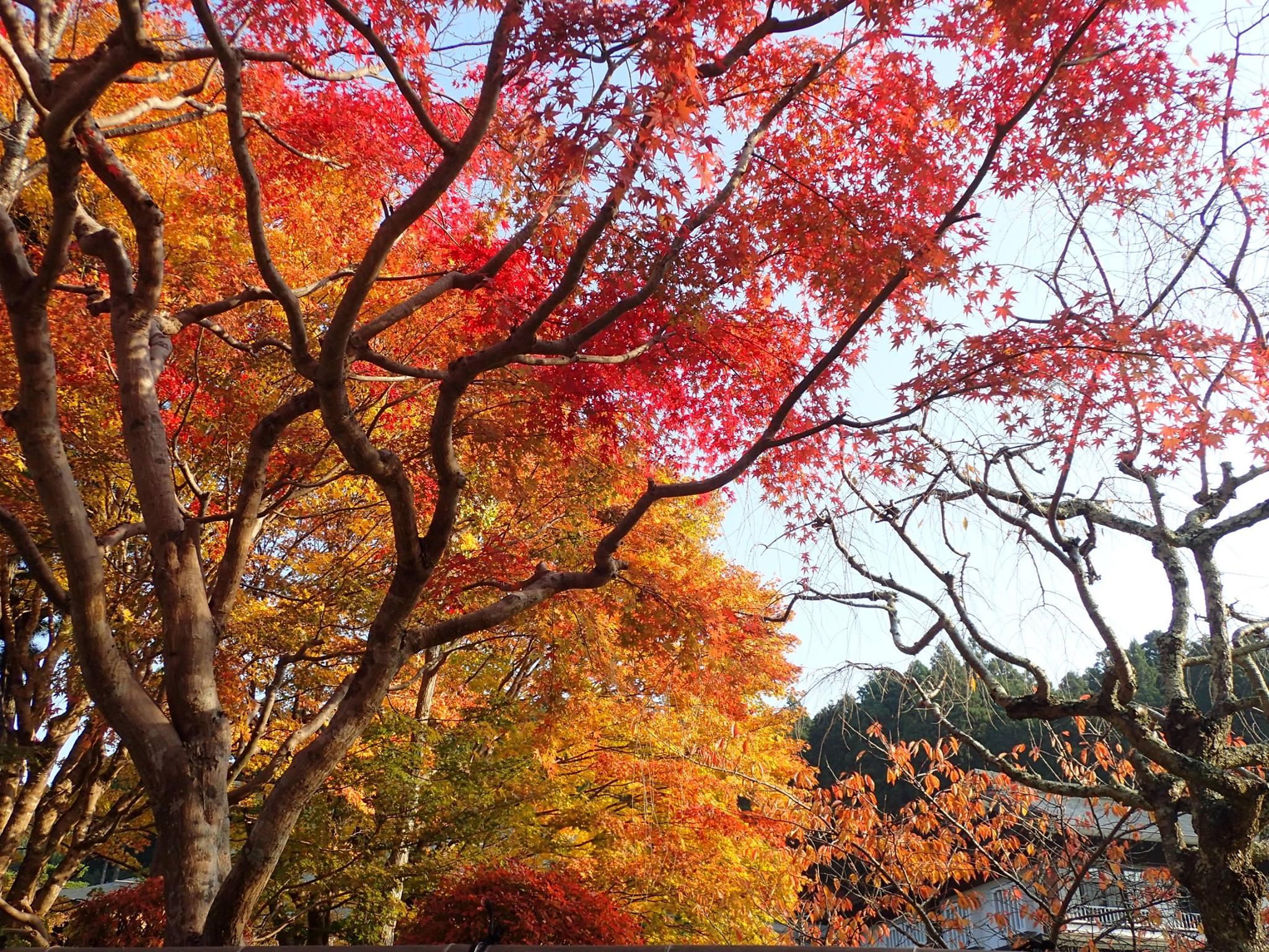 紅葉とてもきれいでしたよ。気持ちが引き締まりした!
